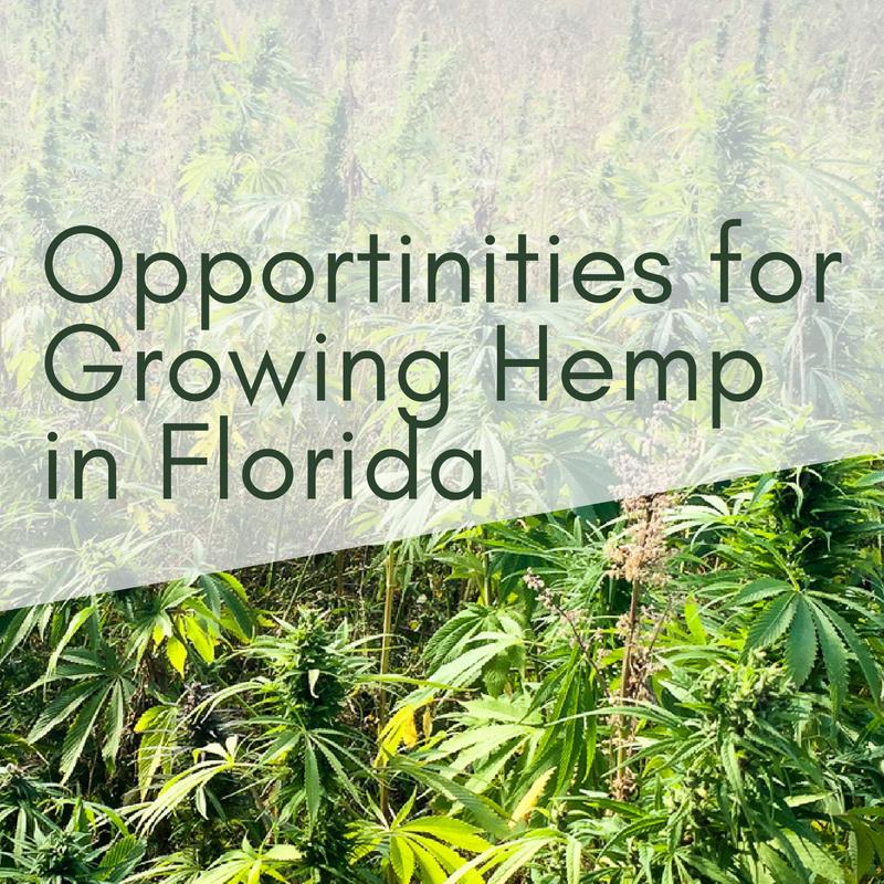 Opportunities for Growing Hemp in FL