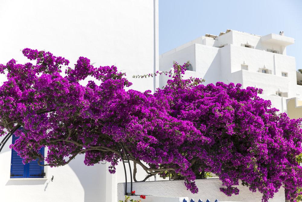 Greece-332.jpg