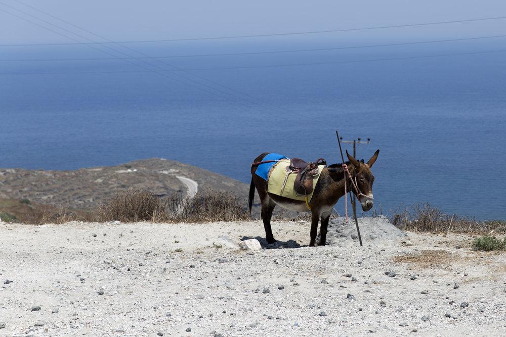 Greece-642.jpg