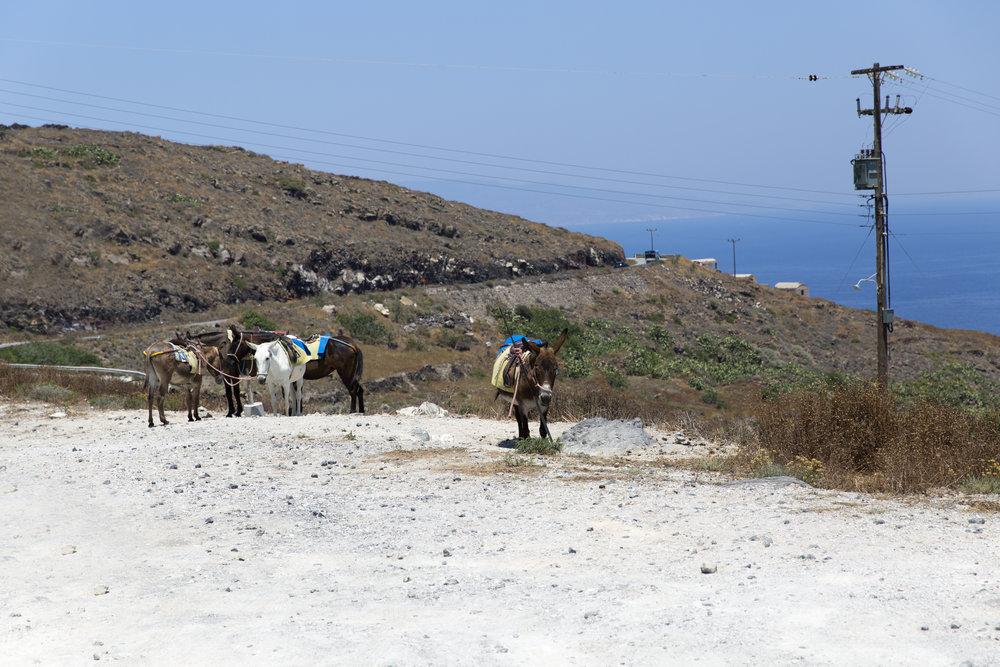 Greece-641.jpg