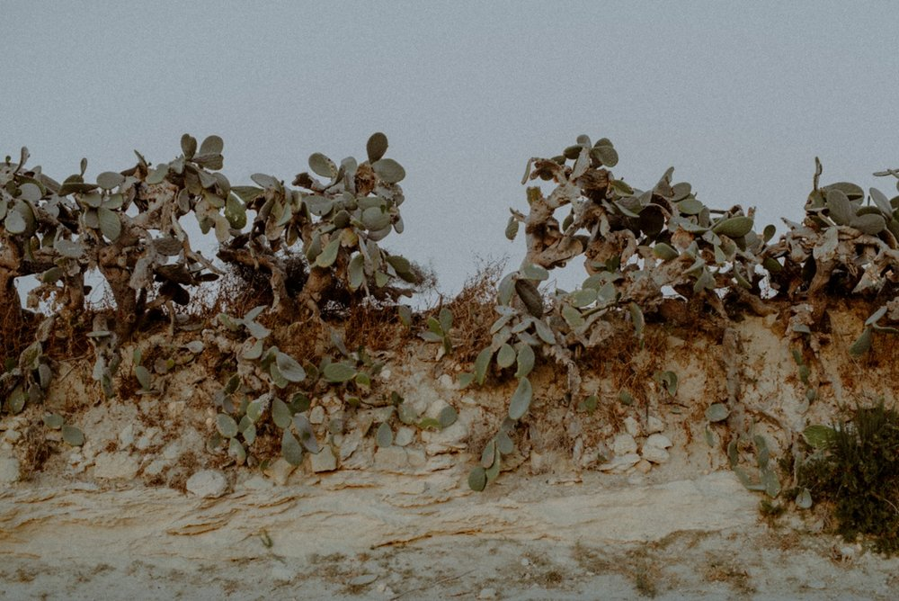 gozo cactus