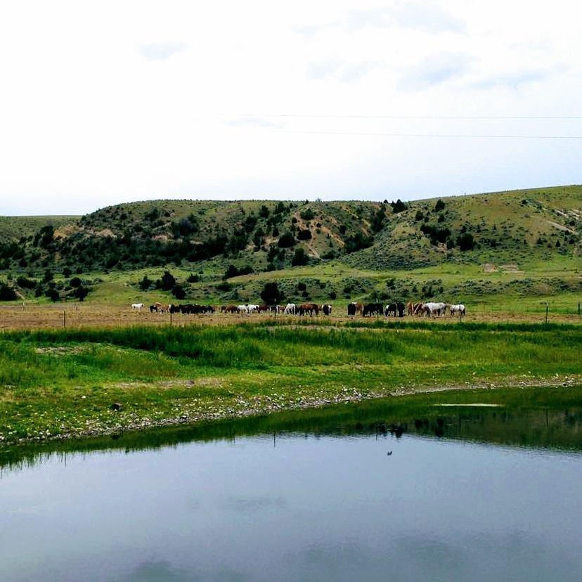 headwaters-hops-ranch-9.jpg