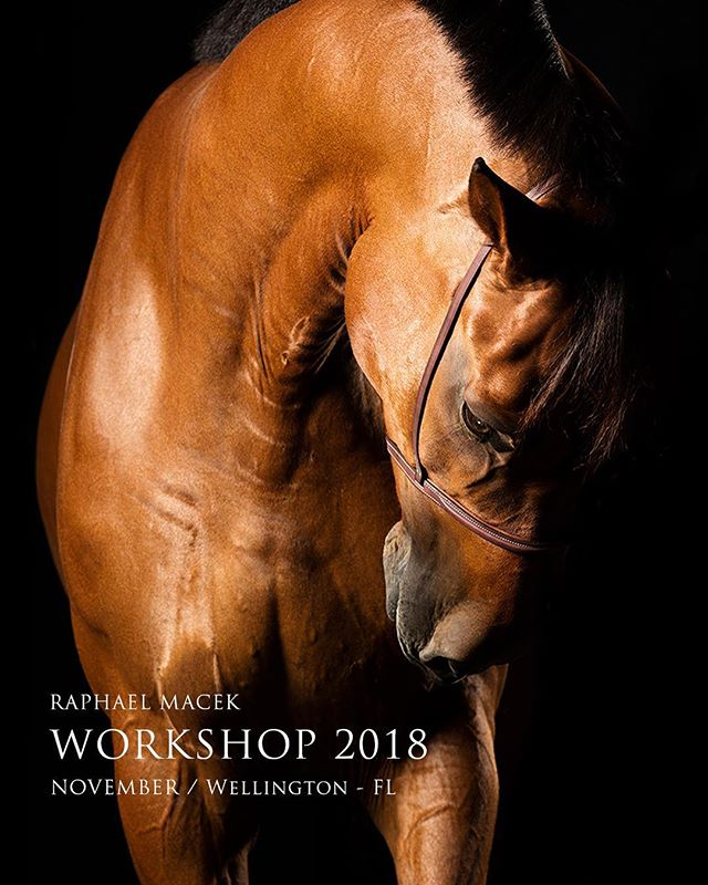 2018 Photography Workshop  More informations coming soon  ONLY 10 spots  November / Wellington - FL  workshop@raphaelmacek.com  _______________________________________  #photo #photography #photographer #workshop #photographyworkshop #horseart #horsesculpture #horse #horses #showjumping #wellington #florida #usa #canon #broncolor #nikon #sony #profoto #light #capture #shadows #emotion #work #dedication #learn #learning #inspire #newbook #comingsoon #2018