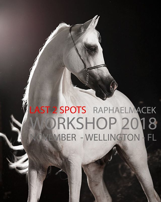 LAST 2 SPOTS AVAILABLE Raphael Macek Workshop 2018  November 15/16/17/18  Wellington - FL - USA  Book now:  www.raphaelmacekworkshops.com  workshop@raphaelmacek.com  _____________________________________________________  #horse #horses #equine #equestrian #cheval #equus #photo #photography #photographer #horsephotography #horsephotographer #horseart # workshop #workshops #2018 #event #photographyworkshop #horsephotographyworkshop #equinephotographyworkshop #showjumping #dressage #farm #stable #conpetition #flash #flashlight #broncolor #profoto #canon #nikon