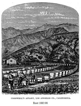 History of Honey Bees Across America — Los Angeles County