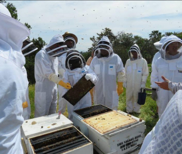 2020 Beekeeping 101 Class Los Angeles County Beekeepers Association