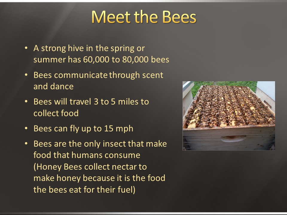 LACBA Meet the Bees