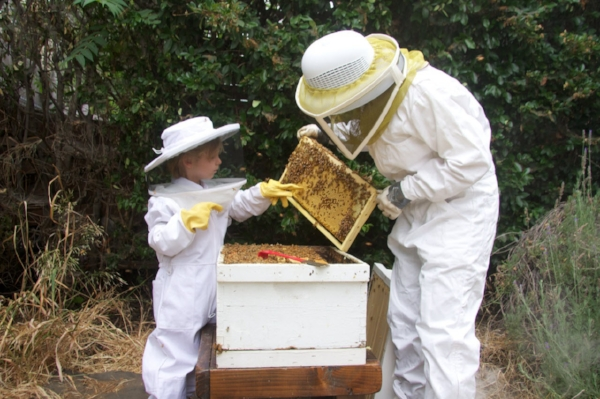 learning about bees and what goes on inside a hive. (photo: kodua Galieti)