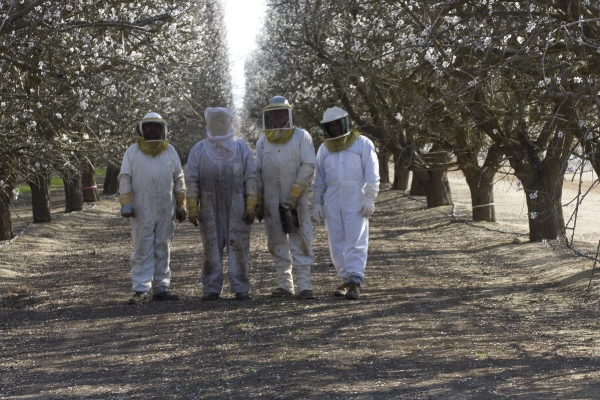KODUA AND HER FELLOW BEEKEEPERS IN THE ALMOND ORCHARDS. pHOTO: KODUA GALIETI