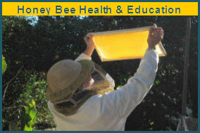 Donate to honey bee health.jpg