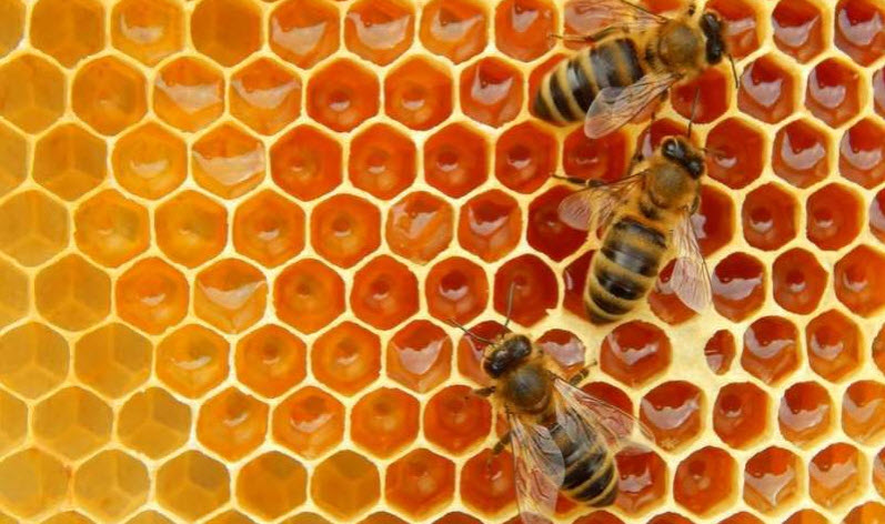 Remotely monitoring honeybee hives can help track the health of the colony. Credit: weter78/ Shutterstock