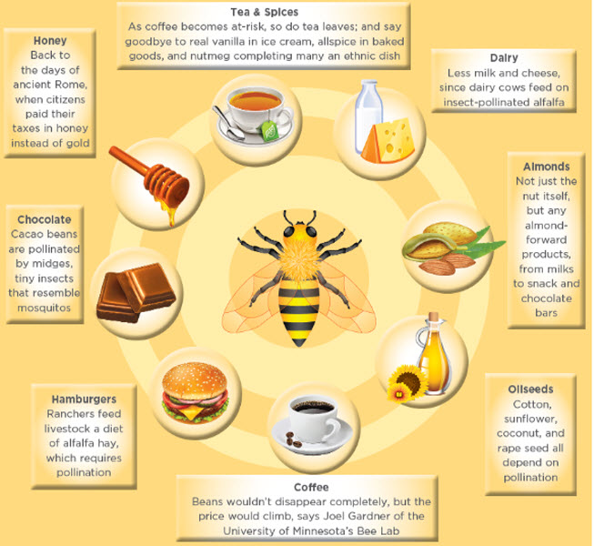 Some of the foods that could be affected if honey bees disappear (Credit: Specialtyfood.com)