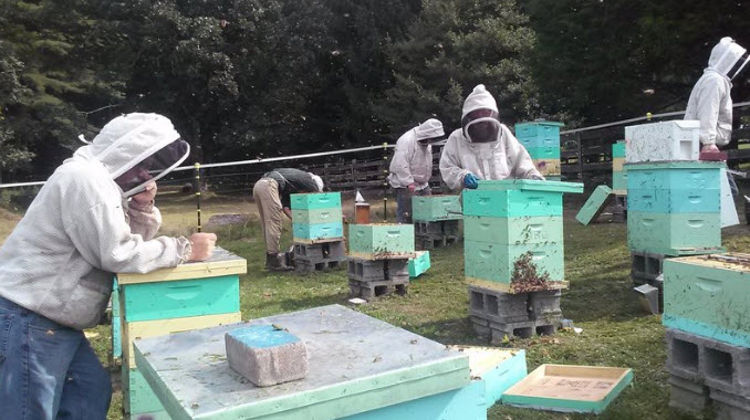 Members of the Appalachian Beekeeping Collective inspect one of their apiaries. The collective teaches displaced coal miners in West Virginia how to keep bees as a way to supplement their income.  Courtesy of Kevin Johnson