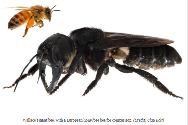 worlds largest bee.jpg