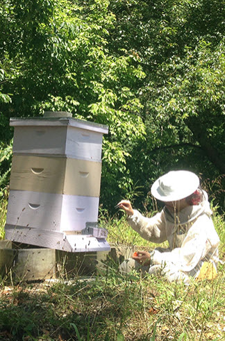 Graduate student Cassondra Vernier conducted lab experiments and observed hours of bee interactions at the entrance to the hive. She is shown here at Tyson Research Center, Washington University's environmental field station. (Courtesy photo)