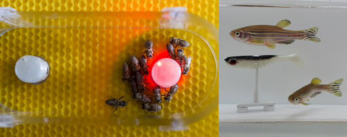 fish and bees.jpg