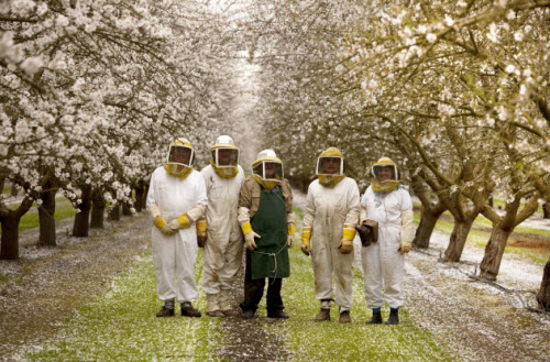 Bill ( on the left) enjoyed A magical day in the almond orchards with the bees and fellow beekeepers.