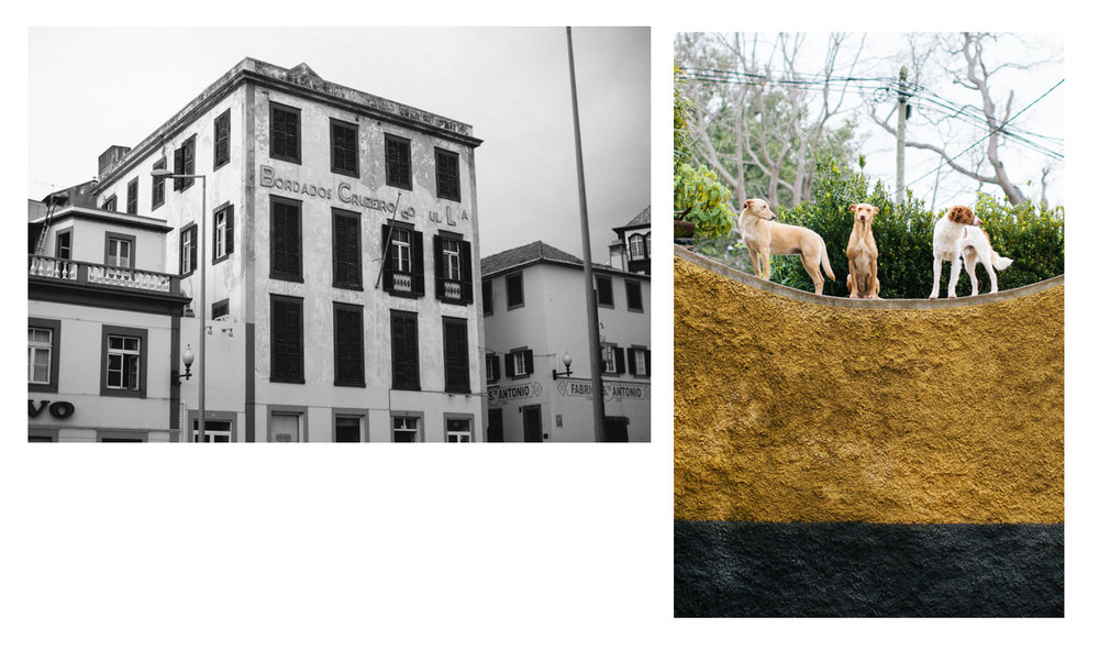 Madeira Blog Collages.002.jpeg