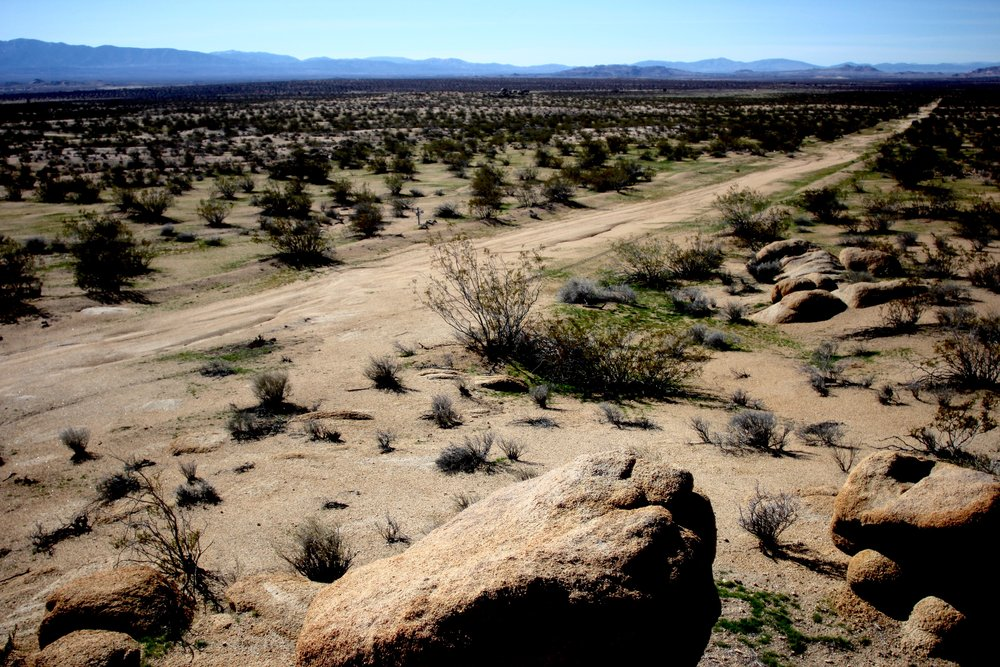 mojave desert - california, usa