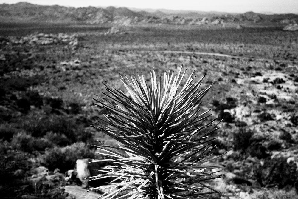 joshua tree park -  california, usa