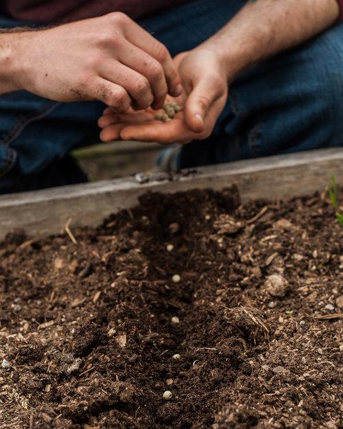 SSW_planting_seeds_1.jpg