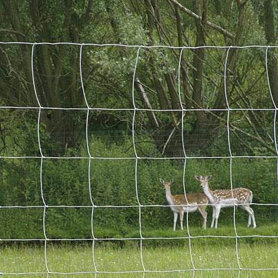 8' Net Deer Fence