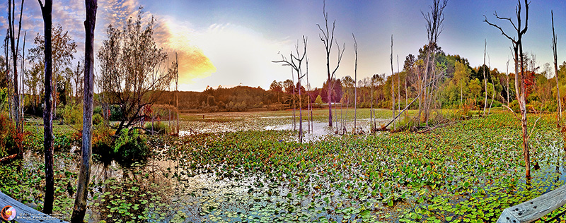 Beaver Pond - CVNP