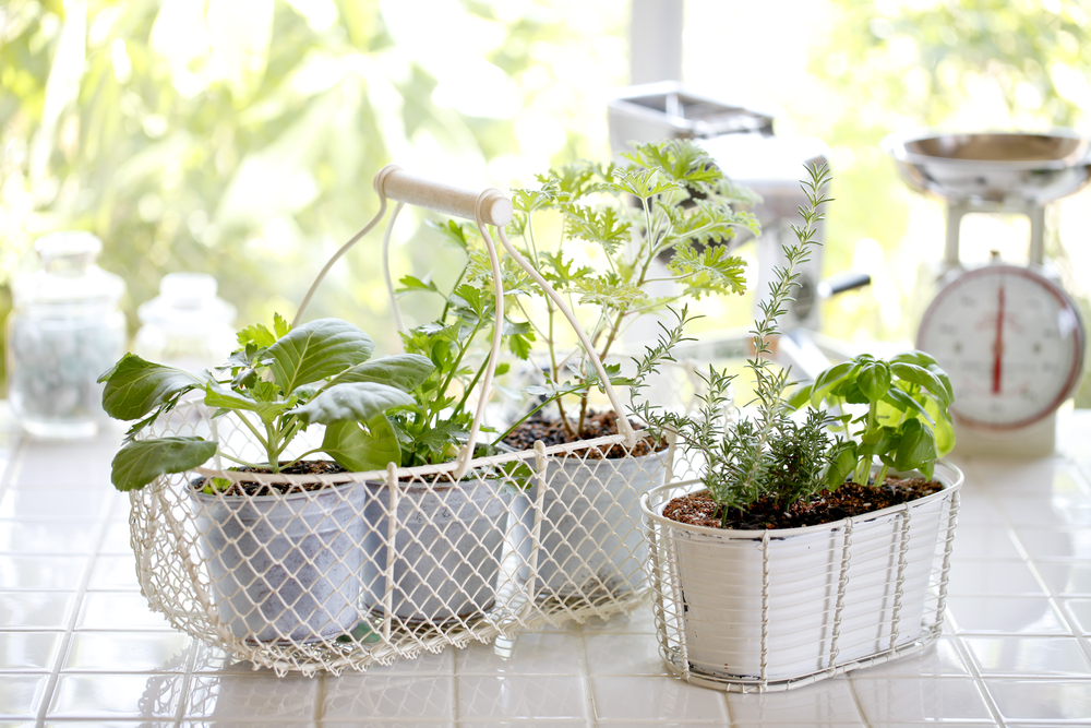 Small garden plants inside a home.