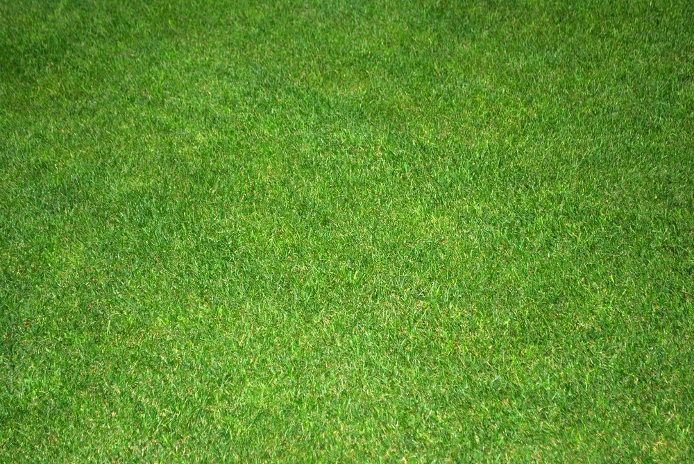 A picture of trimmed grass.