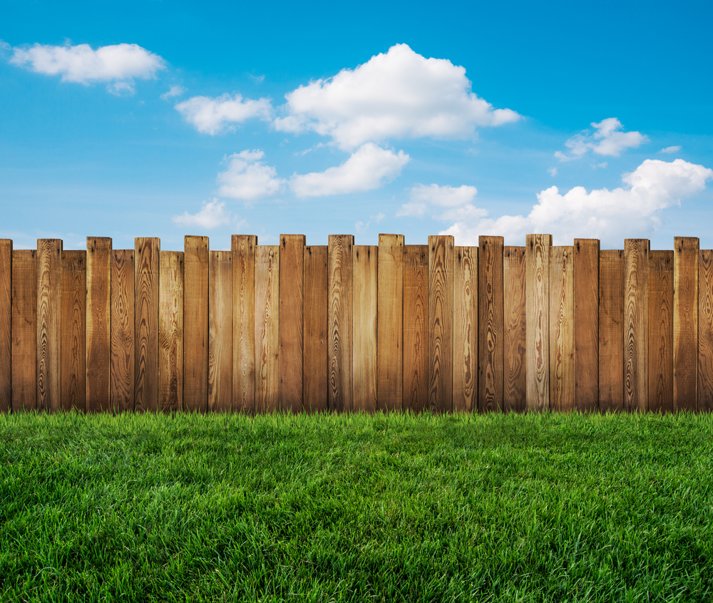 Backyard lawn with wooden fence.