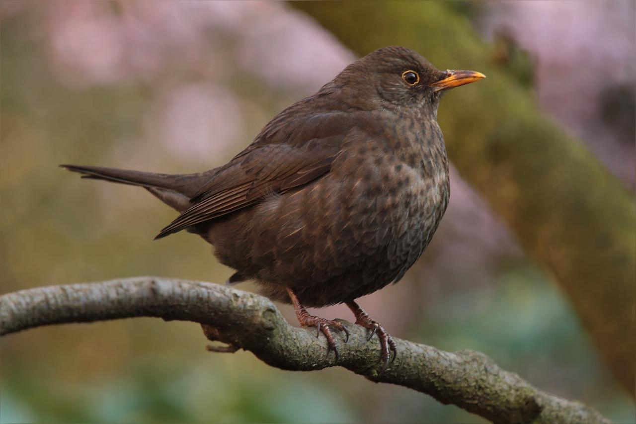 Wallside-Windows-bird