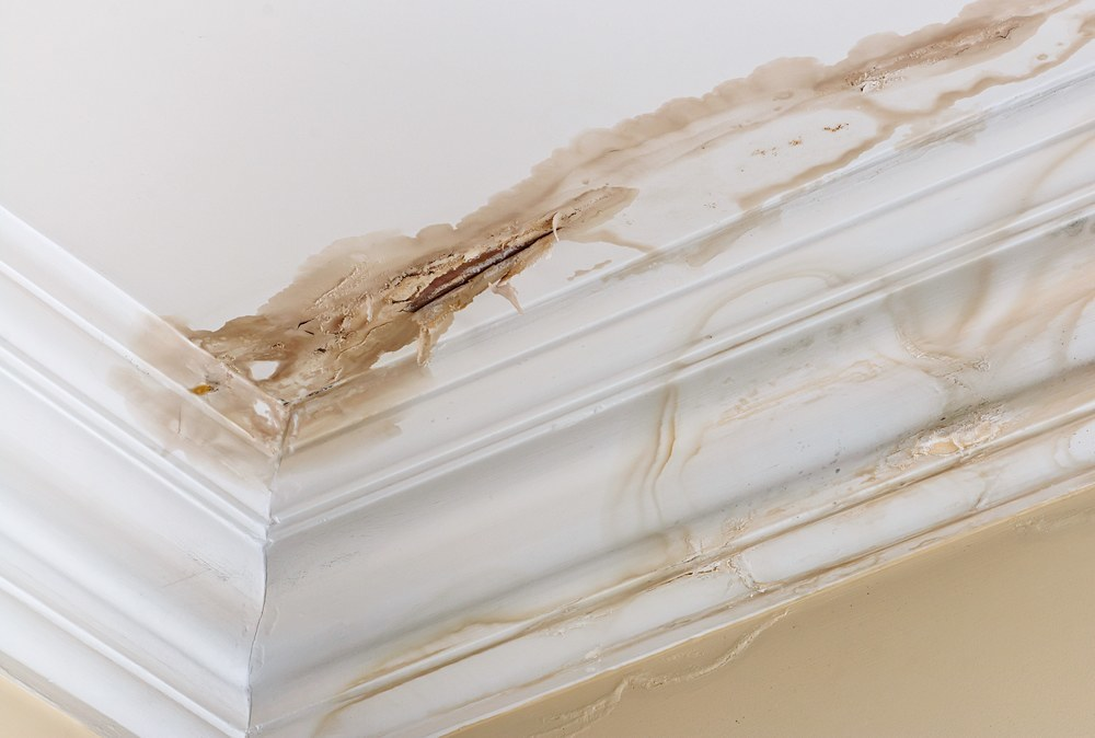 What You Need to Know About Water Damage and How to Prevent It