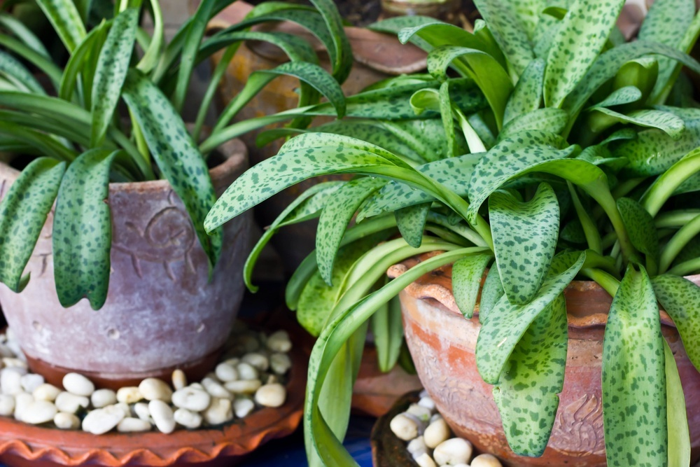 Liven Up Your Home With Houseplants