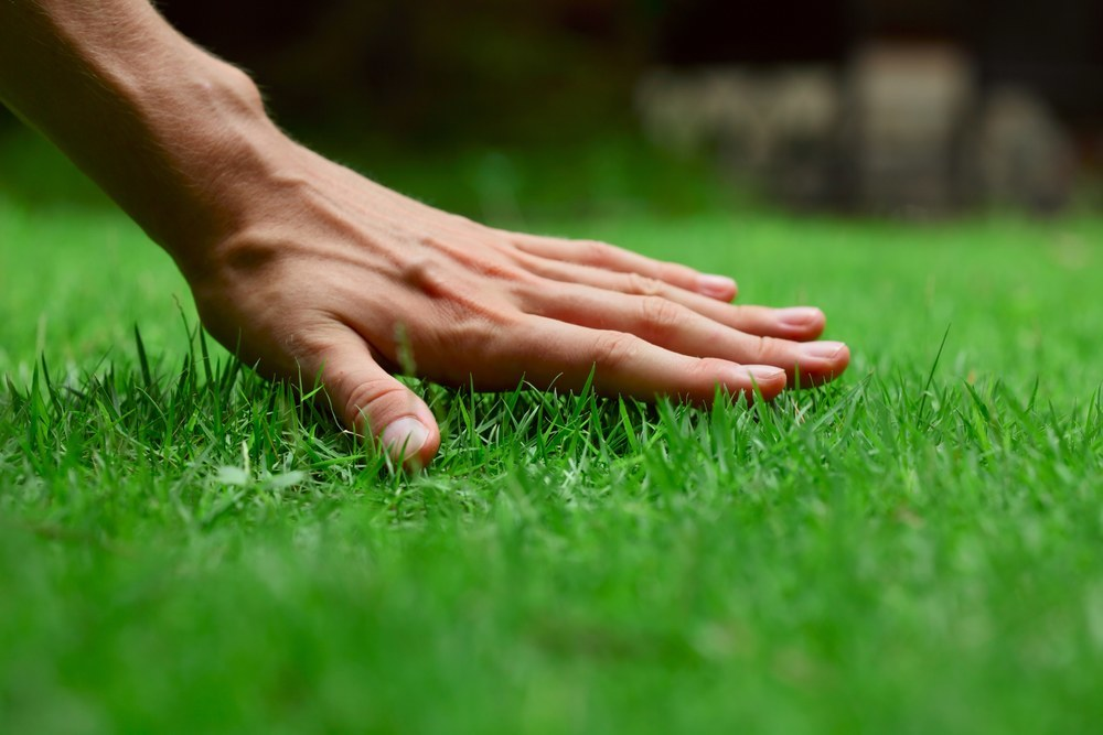 4 Tips for a Green Lawn This Spring