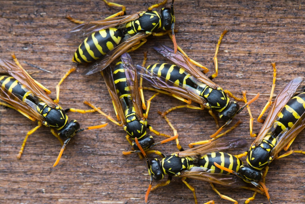 Keeping Wasps in Your Yard Under Control