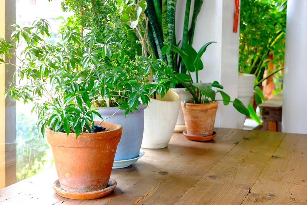 5 Benefits of Keeping Houseplants