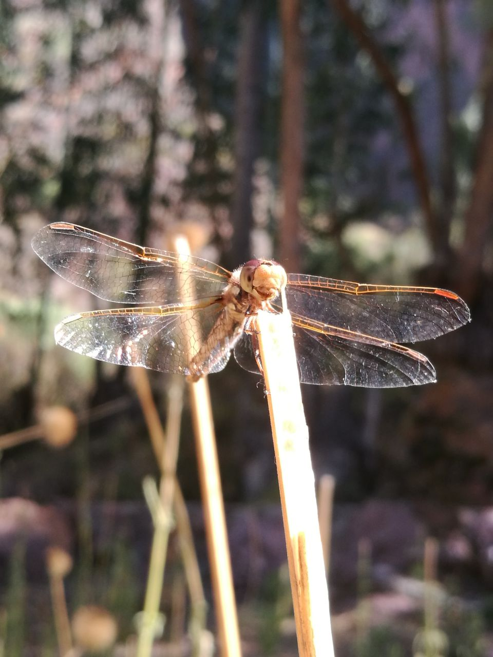 Dragonfly Huachuma day