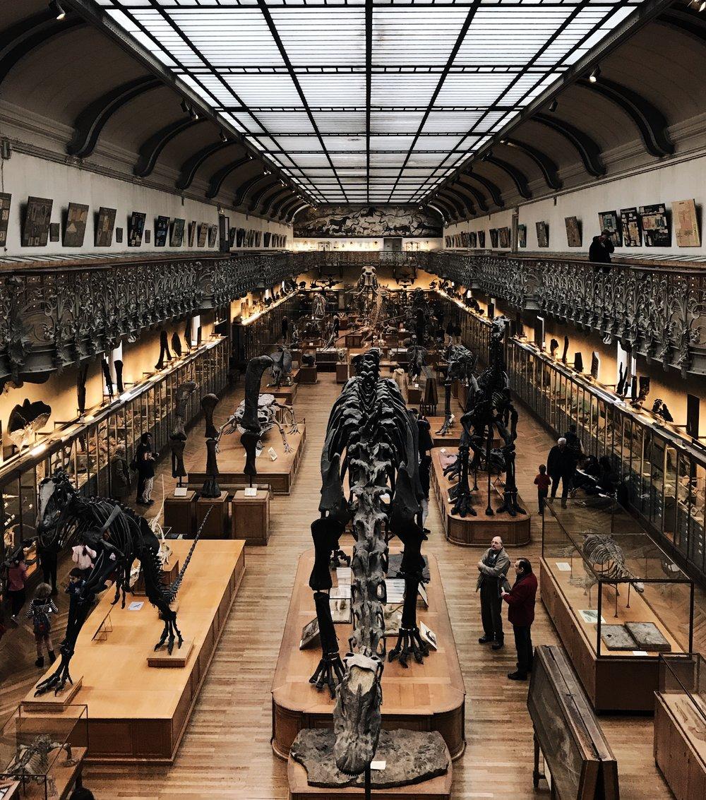 Gallery of Paleontology.jpg