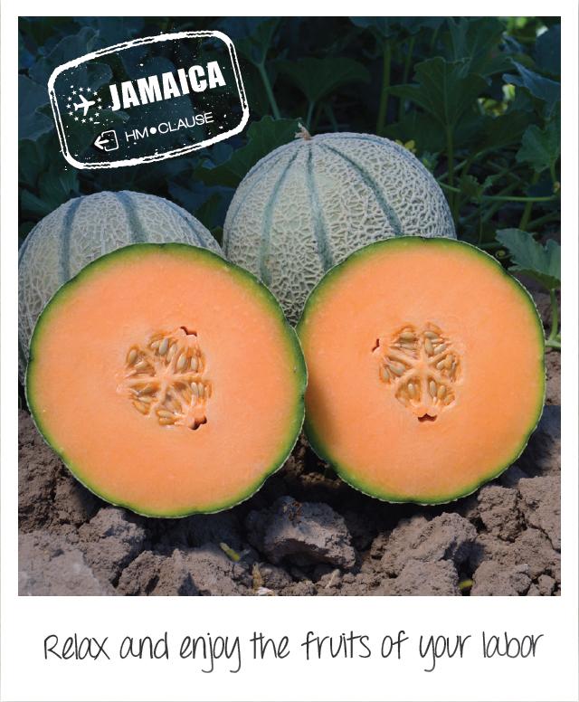 Gallery-Jamaica.jpg