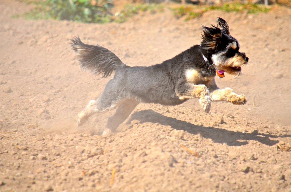 Cri Cri running in the dust!