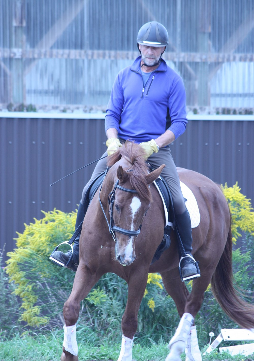 ALEX REINFELS - FOUNDER AND  COOA professional horse trainer and riding instructor with a successful business in Southwestern Ontario. A number of Alex's proteges have competed in the Olympics.
