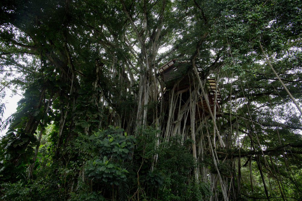 Wilhelm treehouse in Kailua, Oahu, Hawaii