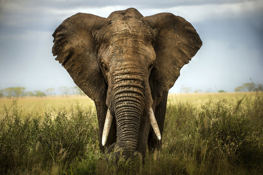 Zimbabwe's Top Experiences: - 1. Rafting the rapids of the Zambezi River2. Understanding why Victoria Falls is called The Smoke That Thunders3. Seeing eye to eye with the elephants in Hwange National Park