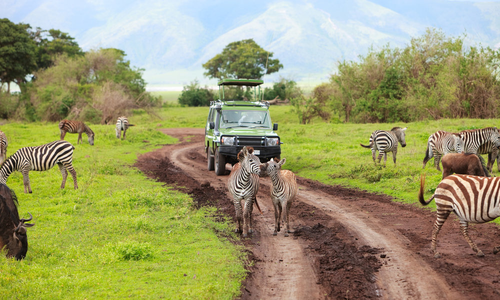 Tanzania's Top Experiences: - 1. Summiting Kilimanjaro at sunrise2.Spotting the Big 5 in Ngorongoro Crater3.Swimming with Whale Sharks along Mafia Island
