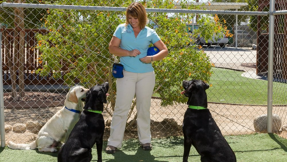Lori at Orphan Pet Oasis