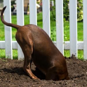 digging-dog.jpg