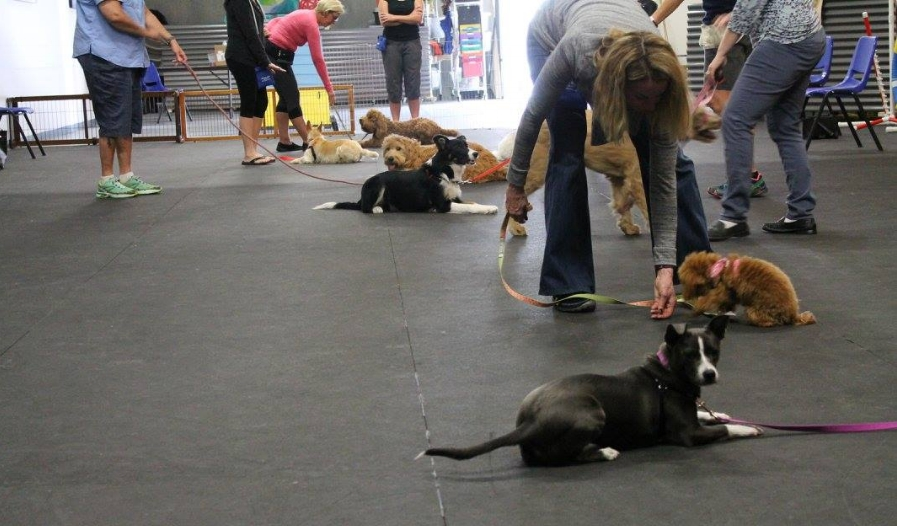 Obedience Classes