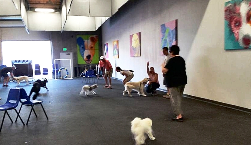 group dog romp class