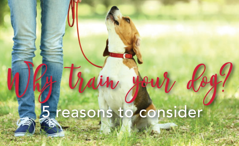 WhyTrain_beagle.jpg