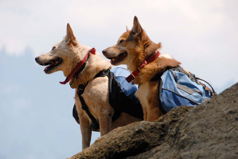 Hiking is a great option for both of you getting out and about.